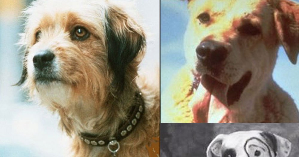 Can You Name these 10 Famous Dogs?